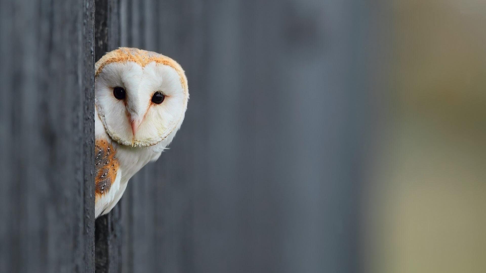 Owl You Need, czyli wszystko czego potrzebujesz…