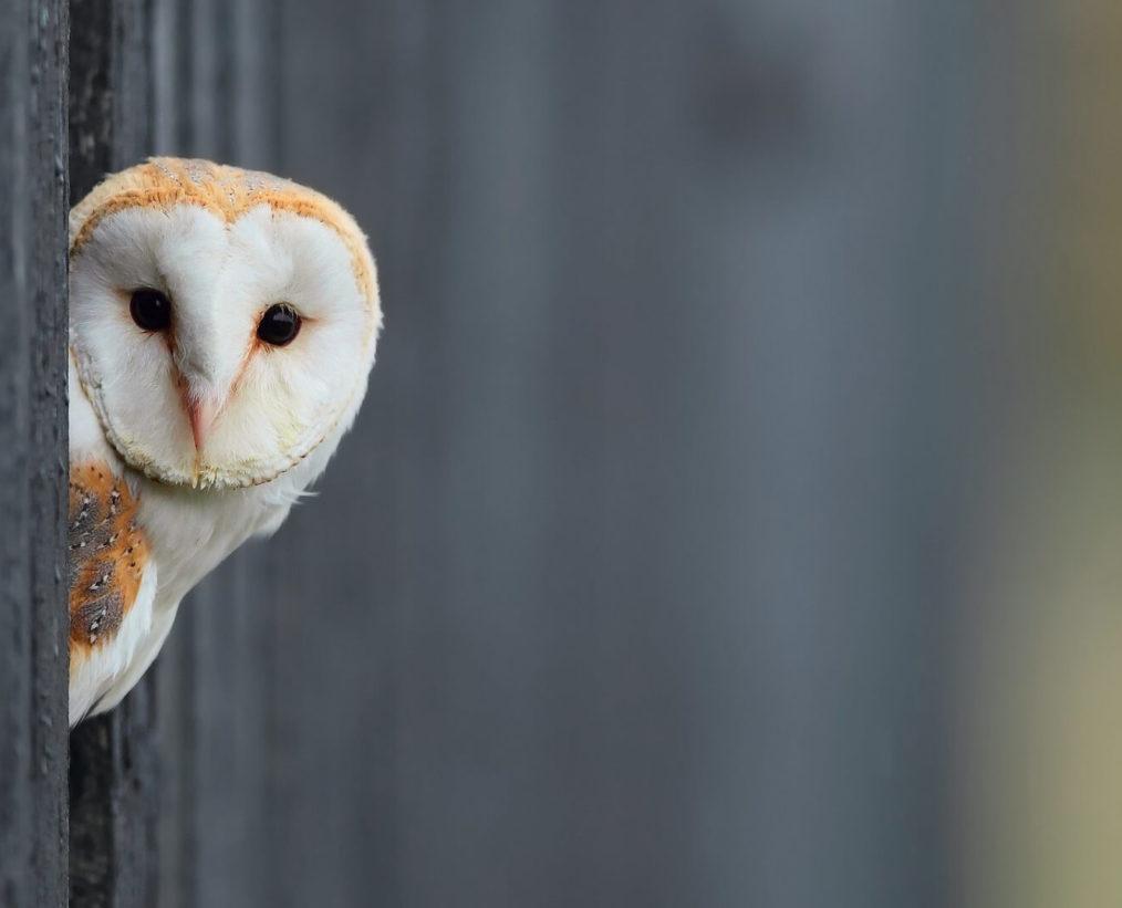 Owl You Need