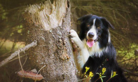 Najlepsze smycze i akcesoria dla psów